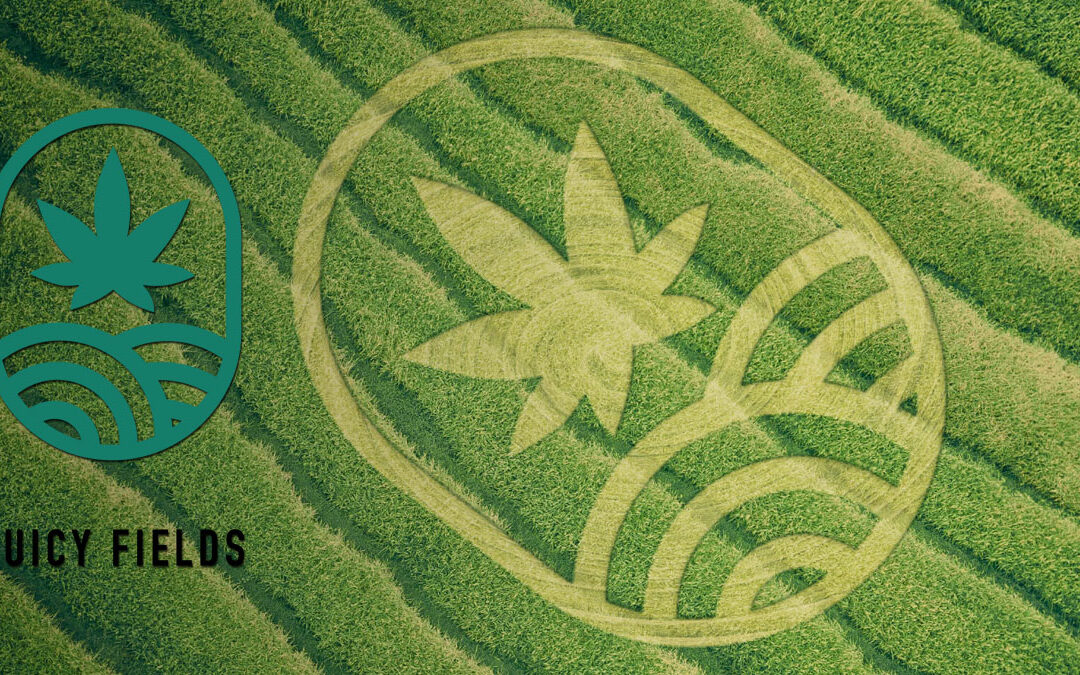 Juicy Fields gives you the opportunity to invest in the crowd growing business